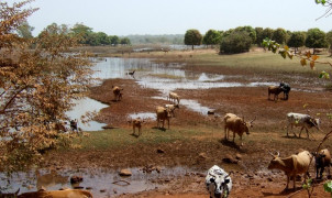 afr-ciwa-niger-river-basin-management-project-to-s