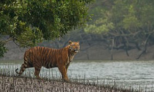SEA for Sundarbans - Bangladesh